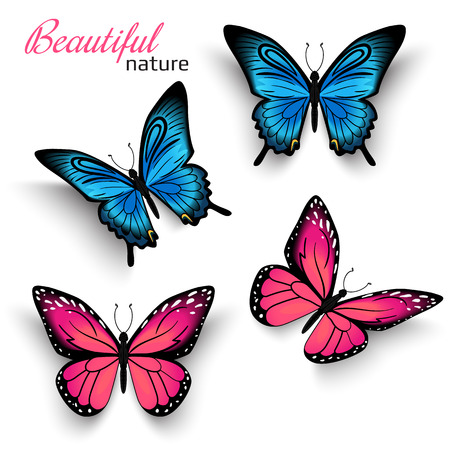 pink wedding: Beautiful realistic butterflies blue and red with shadows isolated on white Illustration