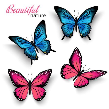 volar: Mariposas realistas hermosas azul y rojo con sombras aisladas en blanco
