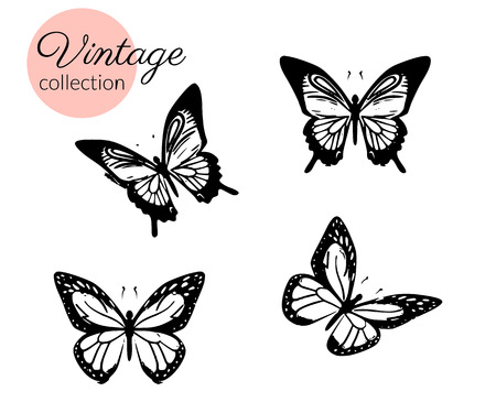 Set of four black and white butterflies silhouette with open wings isolated.