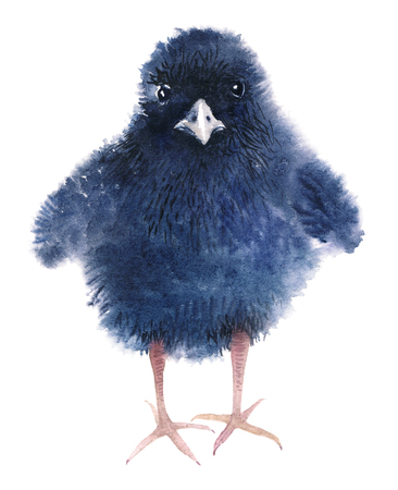 A little fluffy baby of a rail bird. Funny black chick. Watercolor illustration isolated on white background.