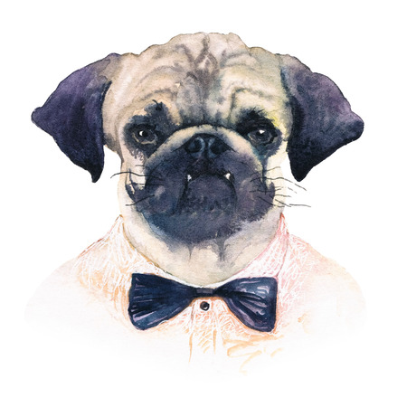 Watercolor portrait of a pug-dog with a bow-tie. Realistic painting.