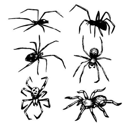 Hand drawn spiders. Halloween decoration set. . Vector illustration