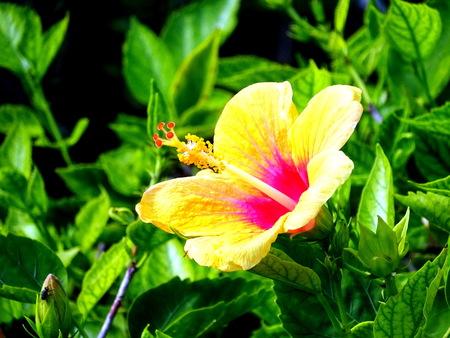 Orchid in park in Bermuda