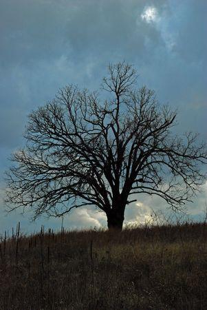 Lonely Tree Stock Photo - 5165582