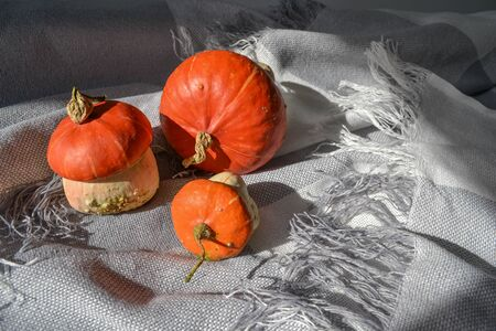 Little decorative pumpkins set. Autumn composition on grey bang blanket with bright sunlight. Season harvest organic vegetables concept. Photo in red and orange colors Stock fotó