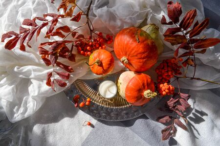 Autumn flat lay photo concept. Decorative pumpkins on metallic tray, white gauze textile and grey bang blanket. Composition with season harvest vegetables, rowan berries, leave. Burgundy, red, orange