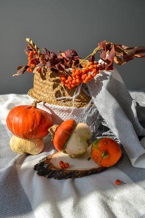Fall cozy vertical photo concept. Decorative pumpkins, bang blanket, season harvest vegetables, rowan berries, leaves, wood slice, rattan basket. Soft warm festive background banner, post, story