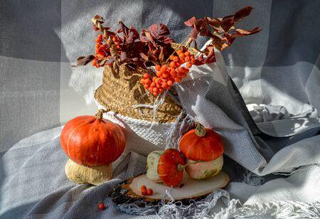 Fall cozy photo concept. Decorative pumpkins, bang blanket, season harvest vegetables, rowan berries, leaves, wood slice, rattan basket. Soft warm color for holiday background banner, post, story