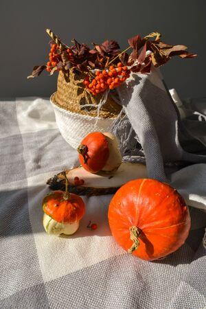 Fall cozy photo halloween concept. Decorative pumpkins, bang blanket, season harvest vegetables, rowan berries, leaves, wood slice, rattan basket. Soft warm festive background banner, post, story