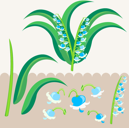 lily of the valley: lily of the valley scrapbooking elements Illustration