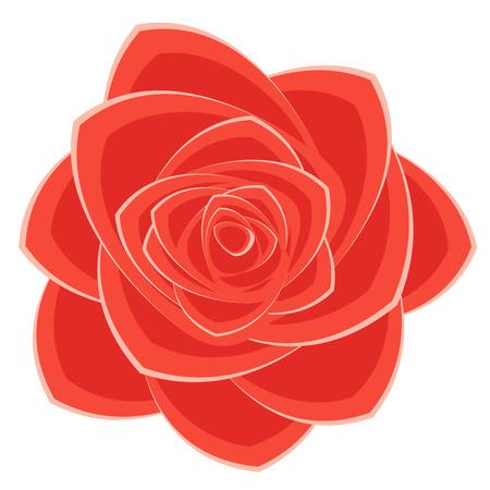 scarlet: scarlet rose