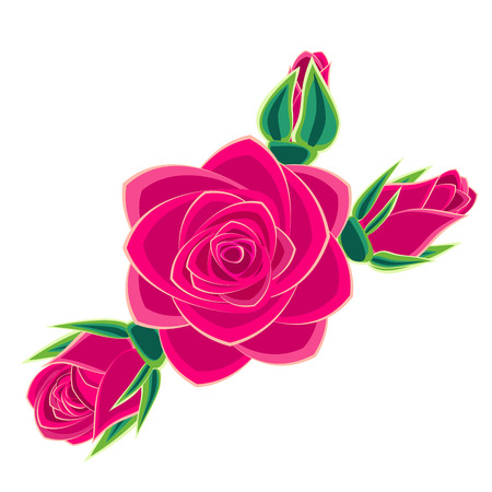 scarlet: pink rose isolated on white background