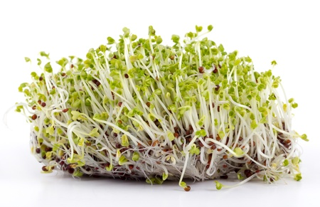 sprouted:  mustard sprouted seeds bud