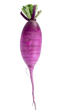 dikon: r�bano daikon p�rpura aislado en blanco Foto de archivo