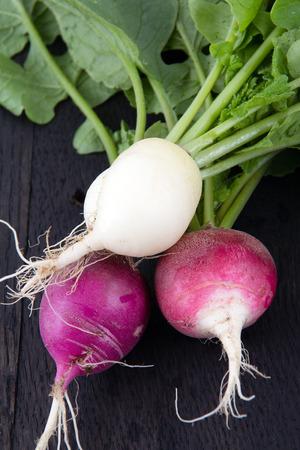 dikon: Primer cultivo de r�bano cosechado org�nico fresco