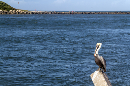 pierce: Pelican bird at the dock with river in the background