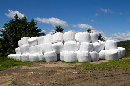hayroll: wrapped hay roll stack