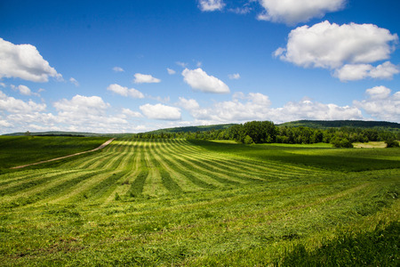 hay field: freshly cut hay field drying landscape