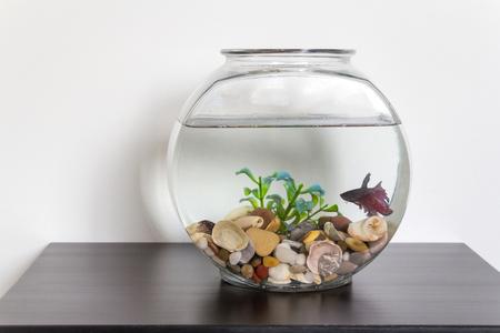 Siamese fighting fish in fish bowl swimming