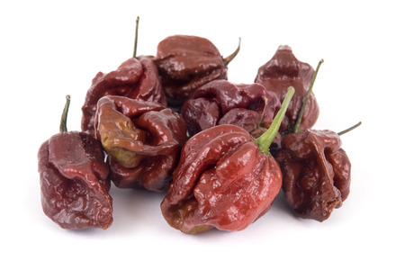 trinidad moruga scorpion chocolate extremely hot peppers variety