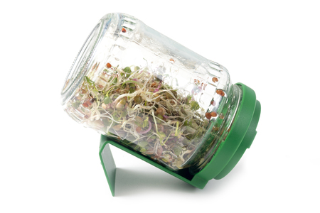 home grown microgreens in a glass jar with plastic lid