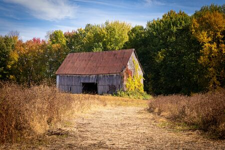 Old abandoned barn in the field autumn season landscape