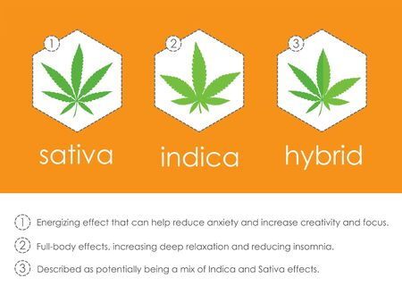 cannabis indica and sativa species information infographic guide