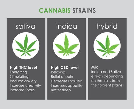 cannabis indica and sativa strains species information graphic guide Иллюстрация