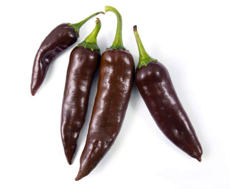 negro de valle brown chile  Capsicum annuum pepper from mexico