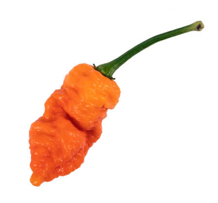orange Death Spiral super hot pepper variety pod over white background Imagens
