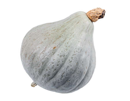 blue hubbard winter squash isolated over white background. This squash has a very tough, bumpy skin that is pale blue-green-gray in color