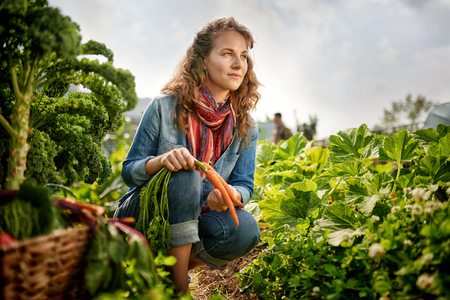 Female gardener tending to organic crops and picking up a bountiful basket full of fresh produce Stock Photo