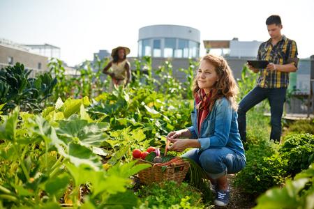 有機作物に傾向と、中小企業の経営者から新鮮な食材の豊かなかごを拾っての庭師のグループ 写真素材