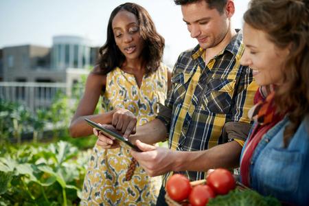 Groep van tuinders neiging om biologische gewassen en het oppakken van een overvloedige mand vol verse producten uit hun kleine bedrijven