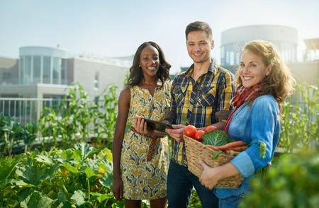 Groep tuiniers die naar biologische gewassen neigen en een overvloedige mand vol verse producten uit hun kleine onderneming oppikken Stockfoto