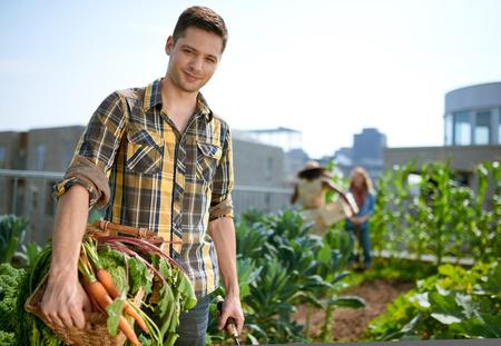 tending: Gardener tending to organic crops and picking up a bountiful basket full of fresh produce