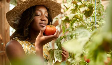 Female gardener tending to organic crops and picking up a bountiful basket full of fresh produce 版權商用圖片