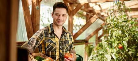 Male gardener tending to organic crops and picking up a bountiful basket full of fresh produce 版權商用圖片