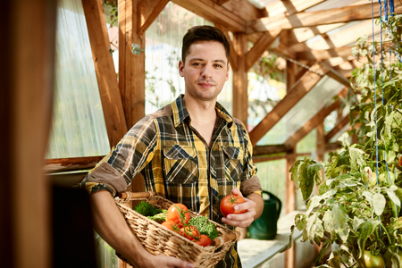 tending: Male gardener tending to organic crops and picking up a bountiful basket full of fresh produce Stock Photo