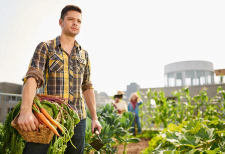 Vriendelijke team oogsten van verse groenten uit de kas op het dak tuin en planning oogstseizoen