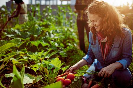 Vriendelijke team oogsten van verse groenten uit de kas op het dak tuin en planning oogstseizoen op een digitale tablet
