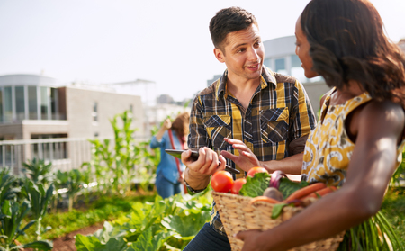 Friendly team harvesting fresh vegetables from the rooftop greenhouse garden and planning harvest season on a digital tablet