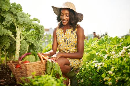 Vriendschappelijke Afrikaanse-Amerikaanse vrouw die verse groenten uit de tuin op het dak verzamelt Stockfoto