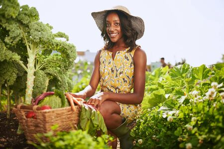Friendly african american woman harvesting fresh vegetables from