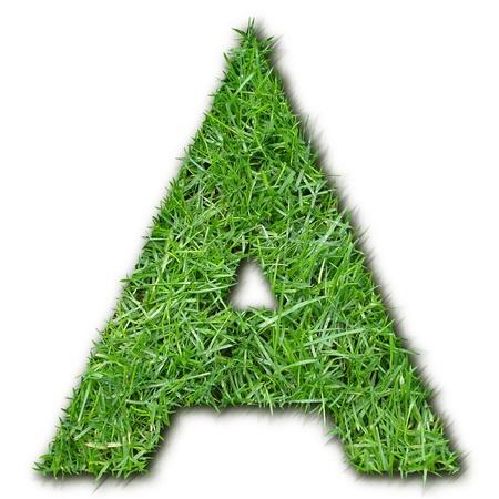 herbe: A grass Stock Photo