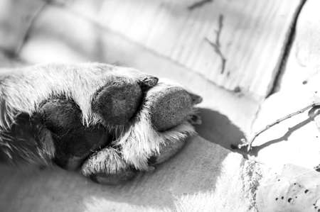 Dog Paw in black and white