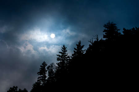 Nighttime moon coming through clouds with forest trees in silhouette.