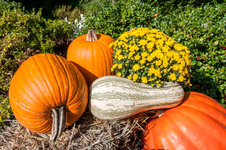 Decorative display of pumpkins, squash and gourds for autumn. Stock Photo