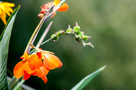 Beautiful orange flower with bokeh green background