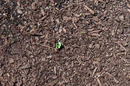 Close up of young plant sprouting from the ground with earth background Stock Photo